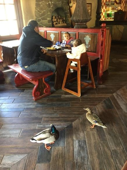 Almoço com patos.